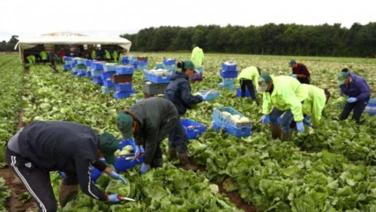 Românii care muncesc în afara țării ar putea beneficia de condiții mai bune de lucru