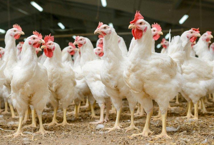 Comerţul ambulant cu păsări, suspendat o lună în toată țara, după apariția gripei aviare în județul Mureș