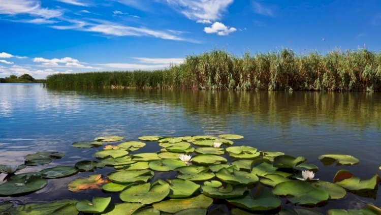 Ziua internațională a Dunării, marcată pe 29 iunie
